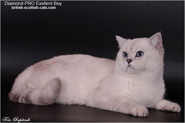 Elit Cattery Diamond-PRO Excellent Boy