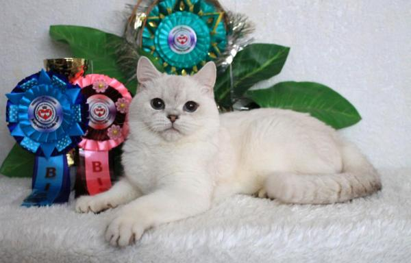 Elit Cattery BRI as 1133 VEGAS ELITE BELL*UA