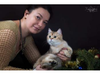 Elit Cattery selling British gold the British, cattery s Donetsk